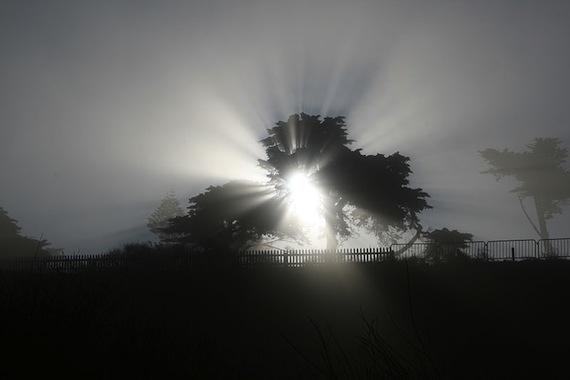 800px-Fog_shadow_of_a_tree-crepuscular_rays